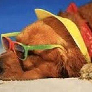 Cosa fare in caso di colpo di calore di cani e gatti, colpo di caldo, calore dei cani