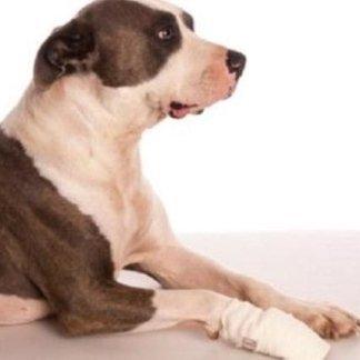 Come eseguire una fasciatura ad una zampa, fasciare un cane, zampa con lesione