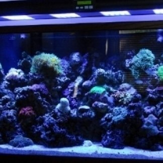 illuminazione per acquari, illuminazioni, effetti scenici