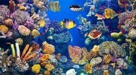 filtri per acquari, articoli per acquari, piante acquatiche