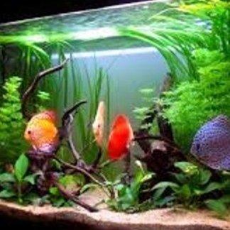 vendita pesci tropicali, pesci rari, pesci di ottima qualità