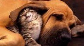 Promozione alimenti per cani e gatti, cani di grossa taglia, cani di piccola taglia