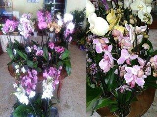 Vendita orchidee