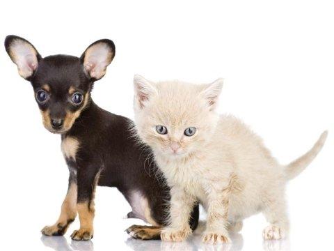 servizio anagrafe canina