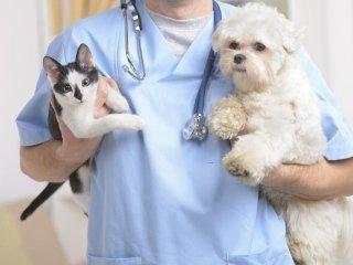 profilassi veterinaria