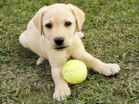adozione cucciolo