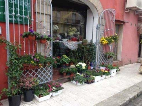 fiori e piante fuori da un negozio