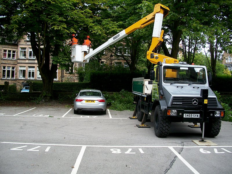 Tree surgeons working