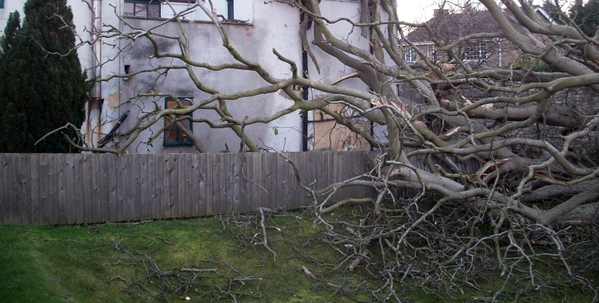 Removal of a dangerous tree