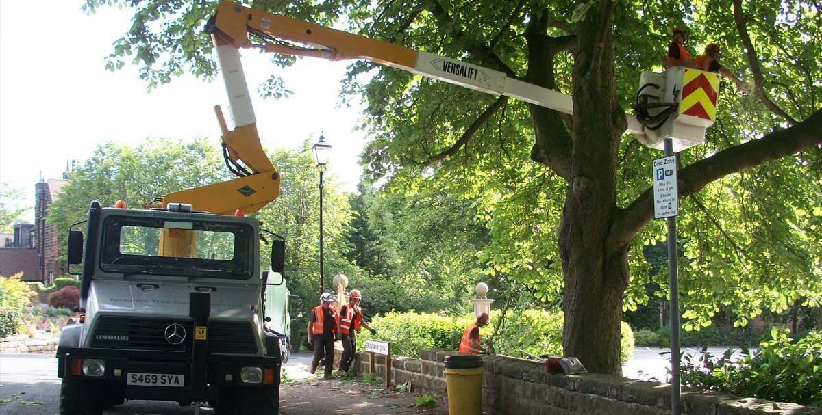 Tree surgeons on a crane removing branches