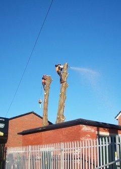 Chopping tree down