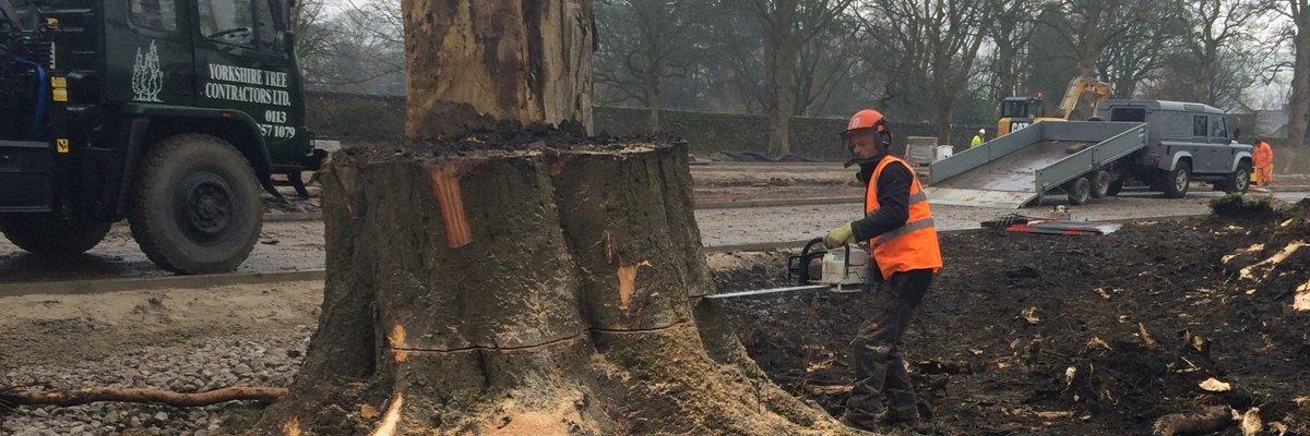 Stump removal expert