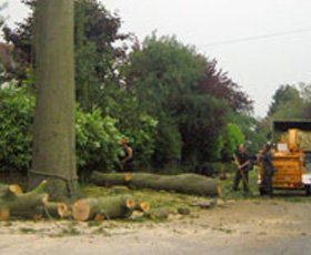 Dismantled large Beech tree after it had shed a large limb into the garden