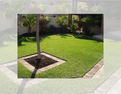 palmetto backyard