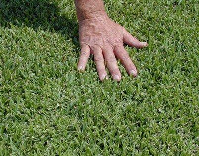 palmetto hand on grass