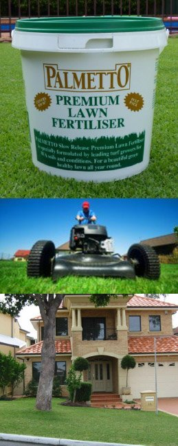 palmetto fertilliser and lawn