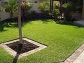 Palmetto lawn garden
