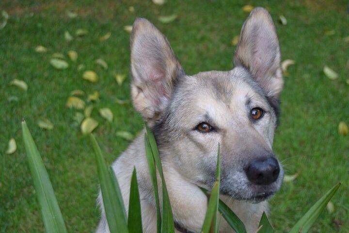 articoli veterinari roma