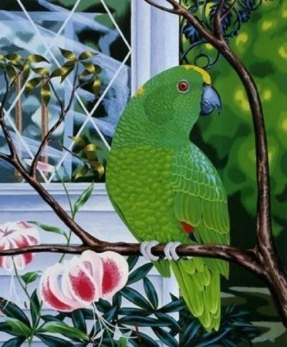 stampa pappagallo