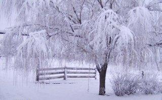 Yoga e alimentazione per l'inverno