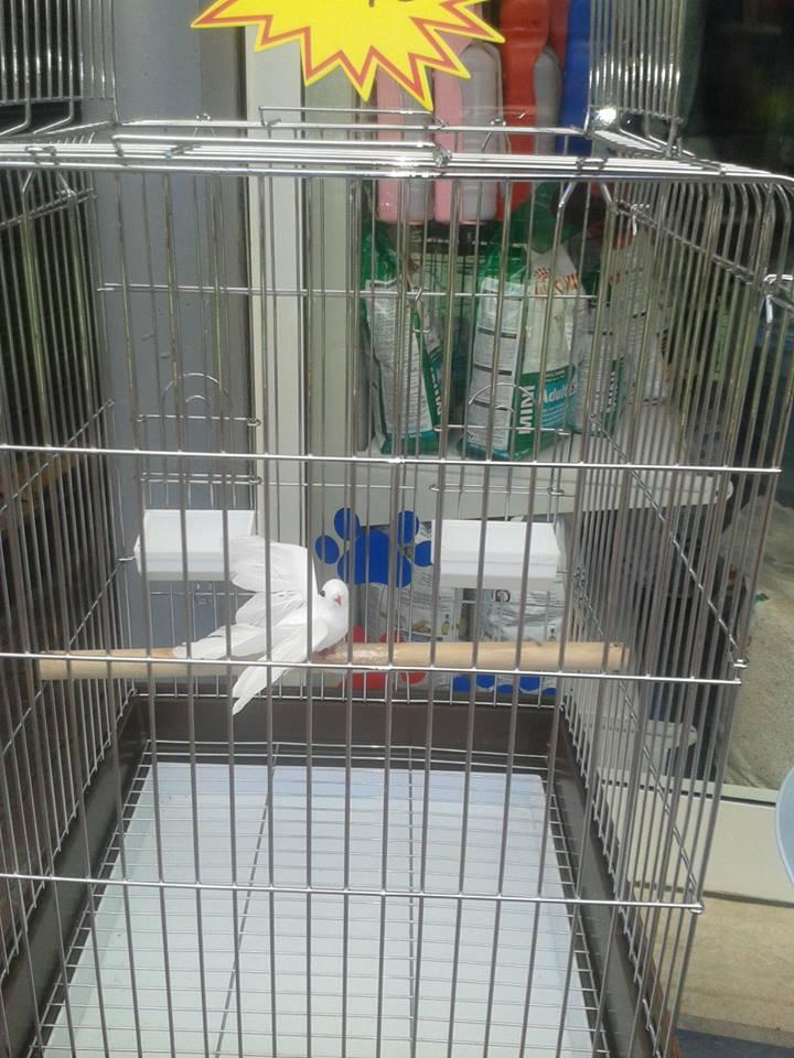 Una gabbia con dentro un uccello