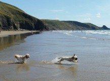 Dog holidays