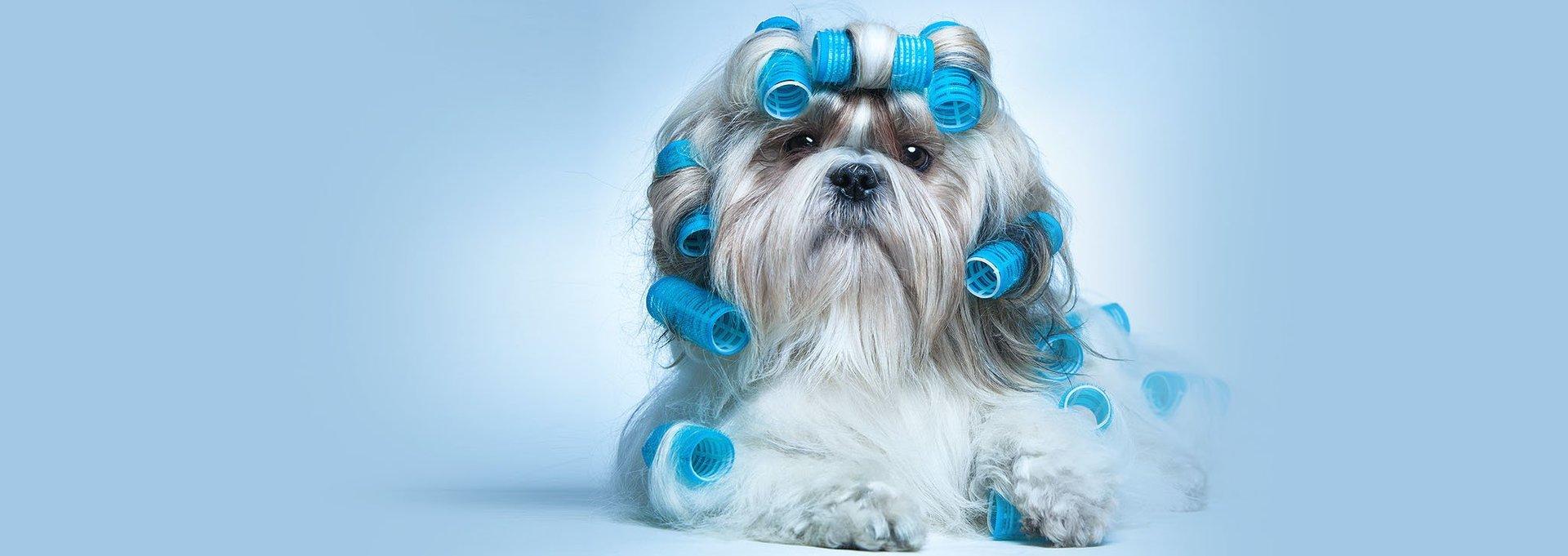 Grooming Stars - Mobile Dog Grooming Santa Monica