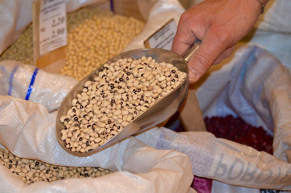 mano mostra del mangime dentro una paletta