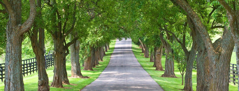 sentiero in mezzo agli alberi
