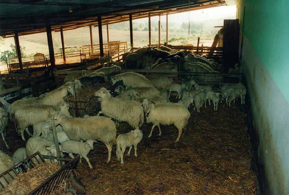 Cooperativa Pastori Associati Sardegna (8)