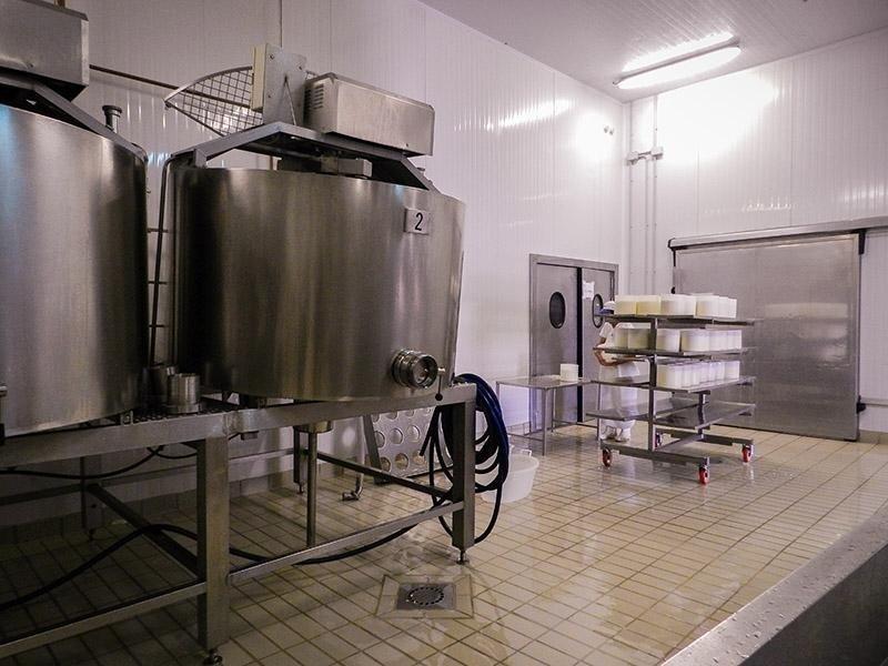Processing of Milk at the PAS Cheese Factory in Villanovaforru, Sardinia