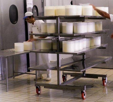 PAS cheese factory:Processing Pecorino di Sardegna
