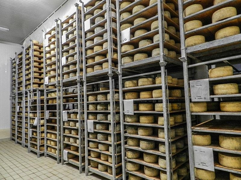 PAS cheese factory Aging typical Sardinian cheeses