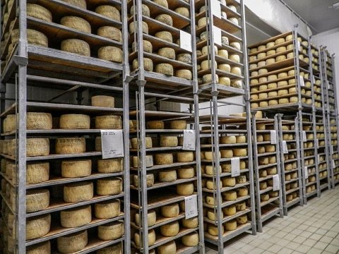 PAS cheese factory in Sardinia:Aging cheeses