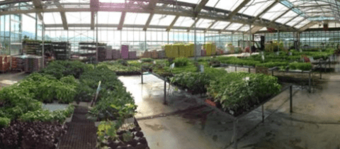 Plants grown with organic fertilizers