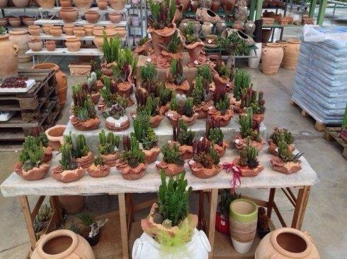 Decorative pots for succulent plants