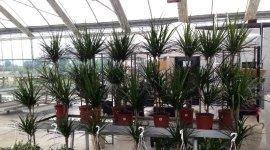 indoor plants, outdoor plants, garden plants