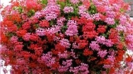 vendita fiori, vendita piante, vendita fiori recisi