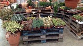 piante da orto, piante grasse, sementi