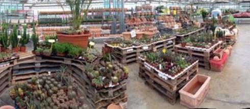 Ornamental pots and plants
