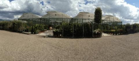 Professional modern greenhouses
