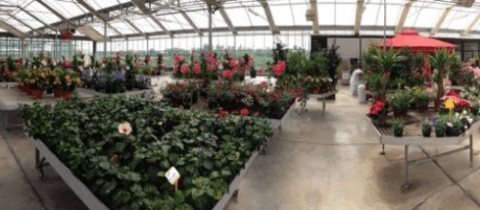 Wide assortment of all types of plants