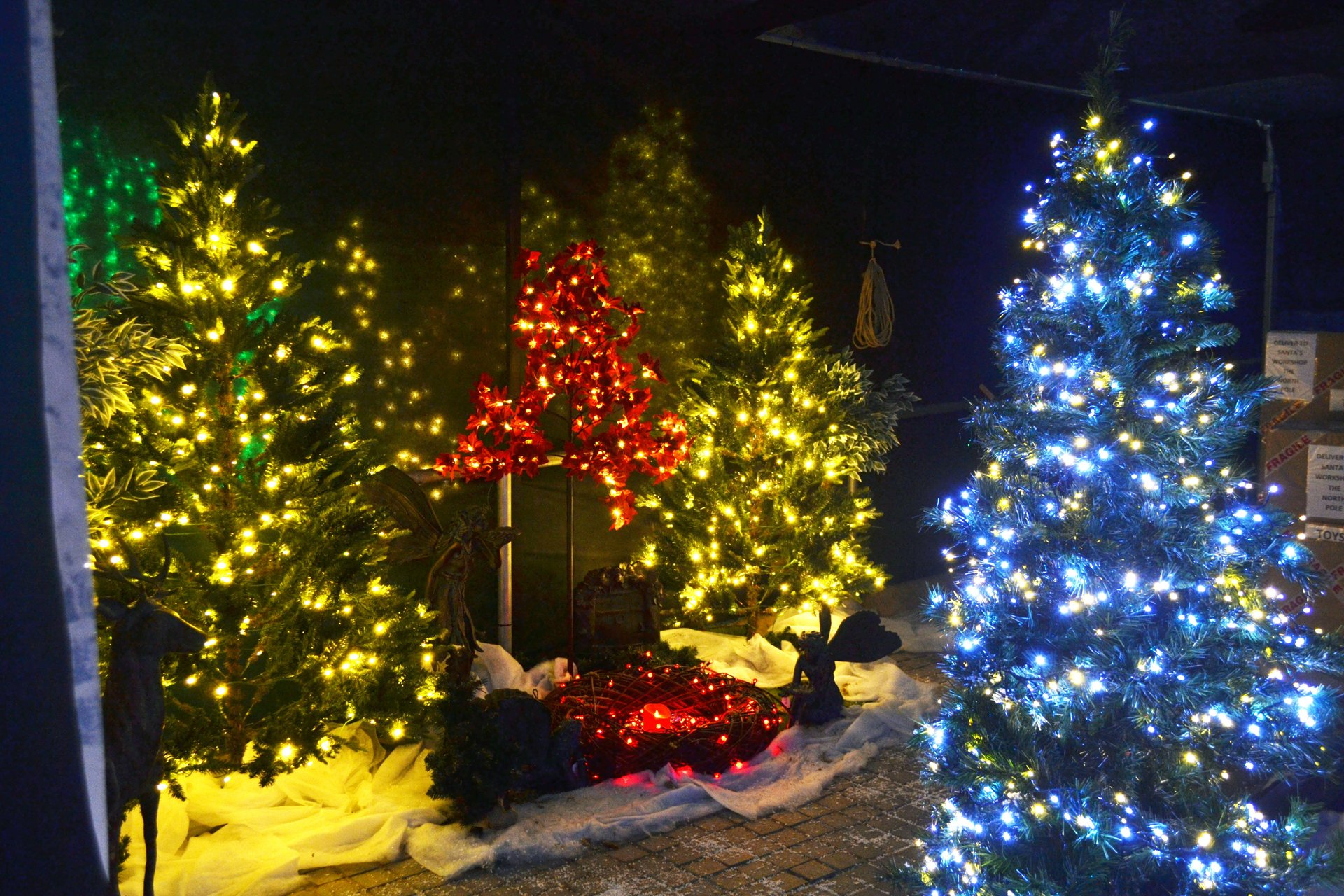 Moulton Nurseries Christmas 4