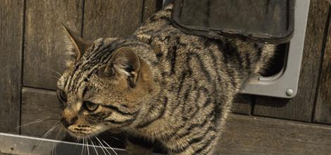 Cat Flaps In Glass Bristol Bristow