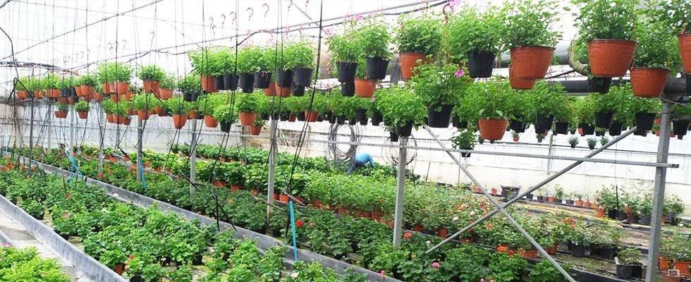 piante di stagione