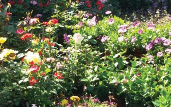 vendita piante fiorite