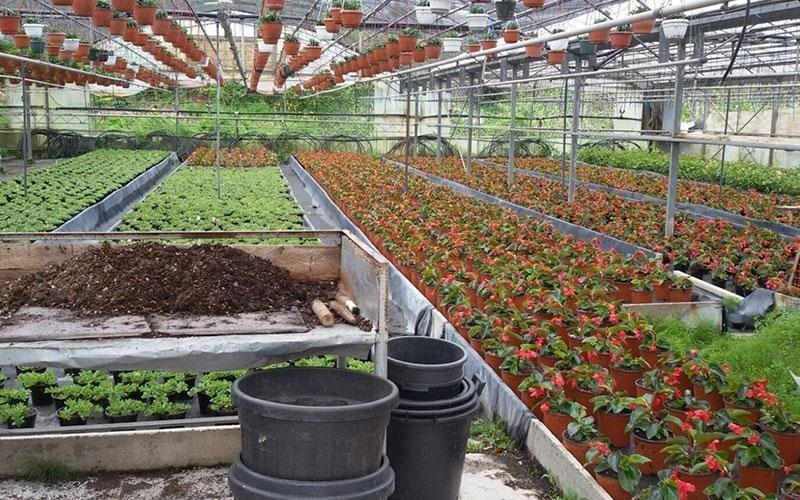 Produzione propria piante