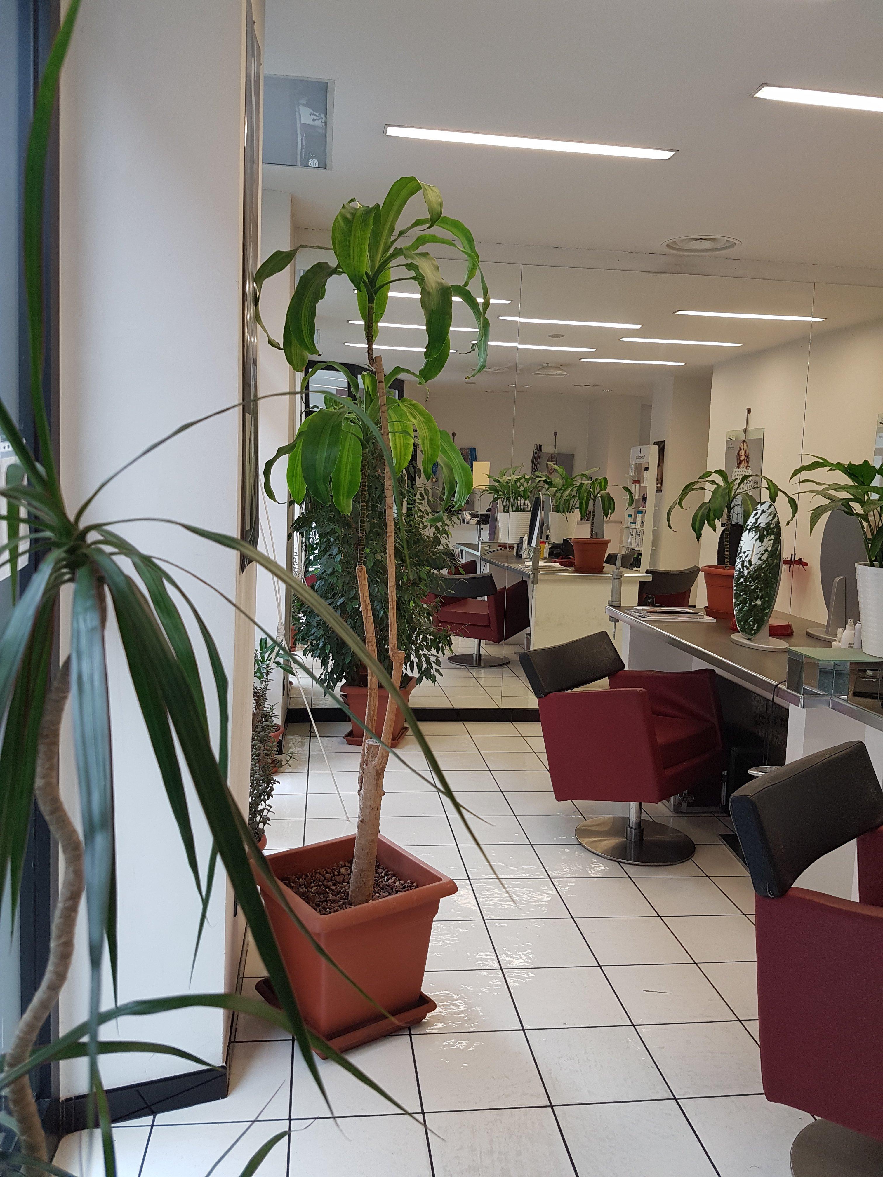 sala di un parrucchiere con pianta verde