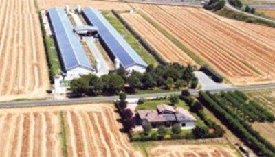 azienda di avicoltura