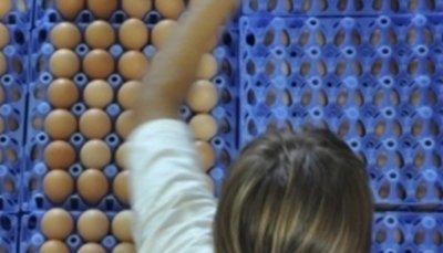 produzione di uova
